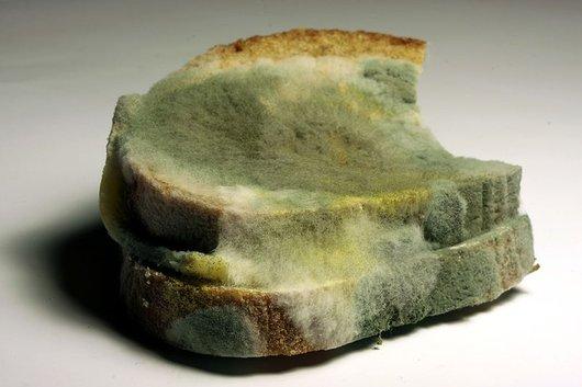 beschimmeld brood eten