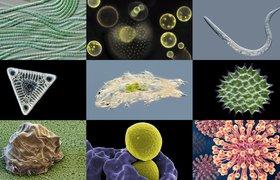 Microbiologie Van A Tot Z Micropia